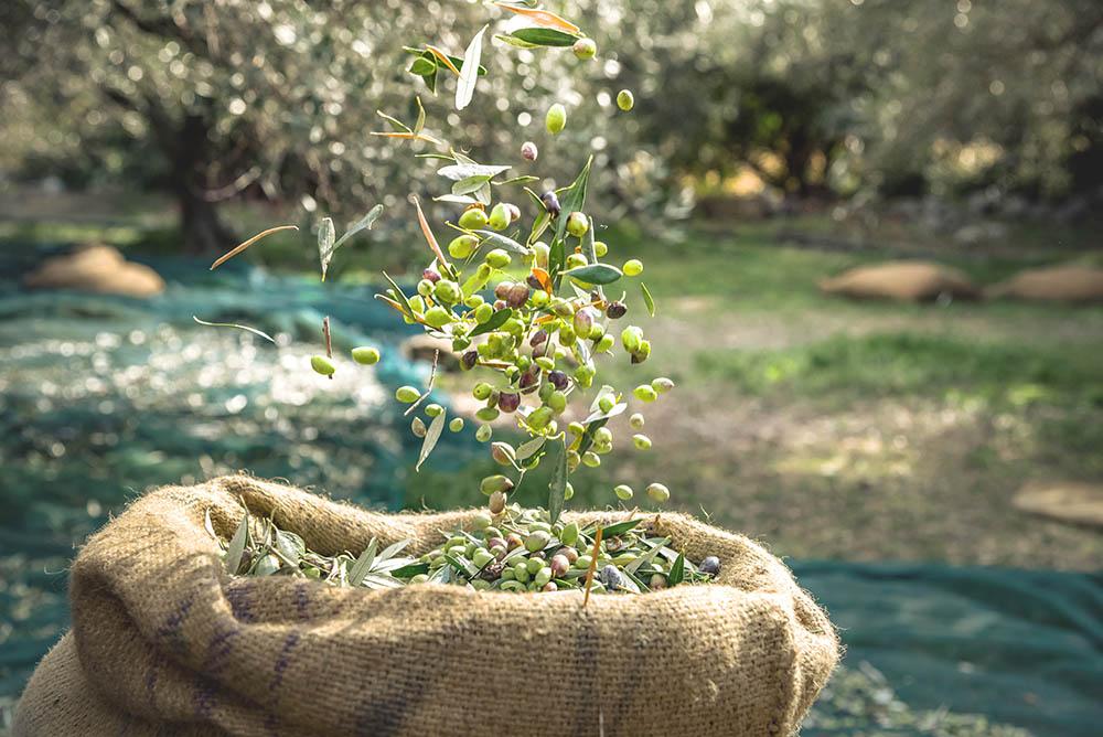 oliveoil_oef_20211023